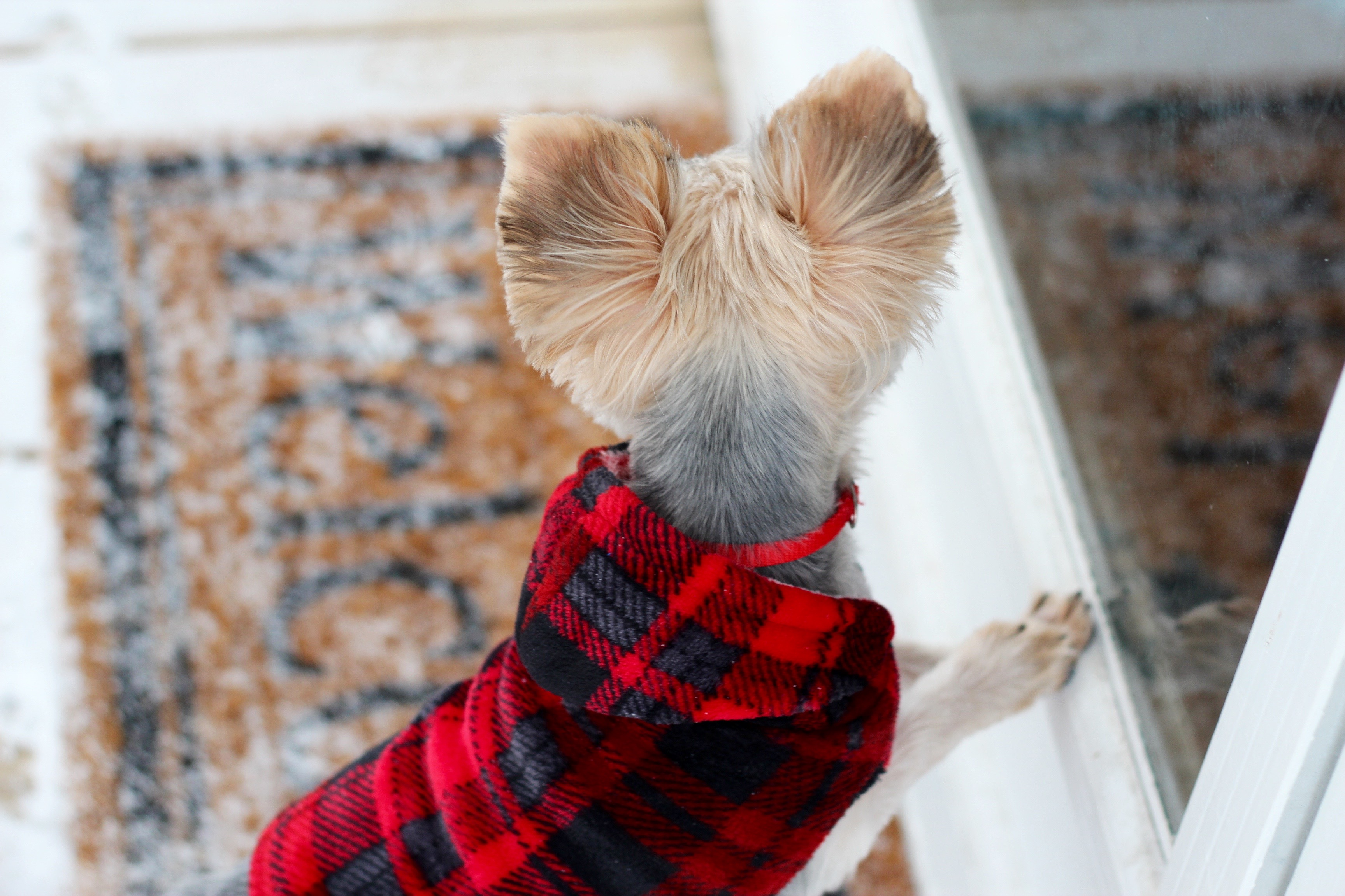 the perfect pup gift guide